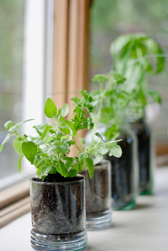 2-Sill_Plants