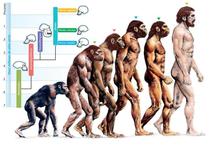 A chart of the stages of the evolution of man.