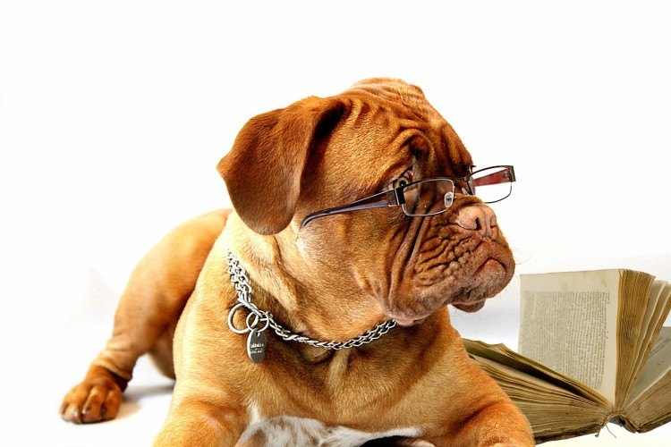 Image of dog with glasses.