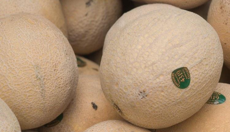 Pile of cantaloupes.