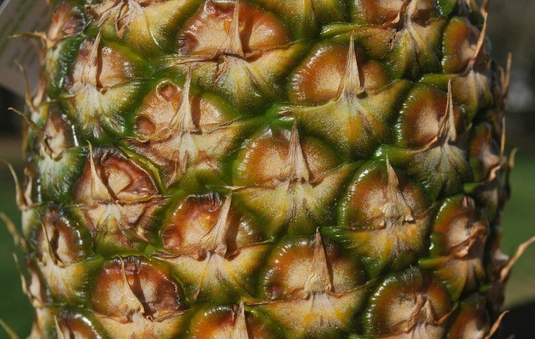 Image of pineapple skin.